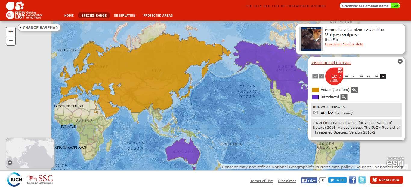 Şekil 11. Ülkemizde de yayılış gösteren kızıl tilkinin (Vulpes vulpes) dünyadaki yayılışı
