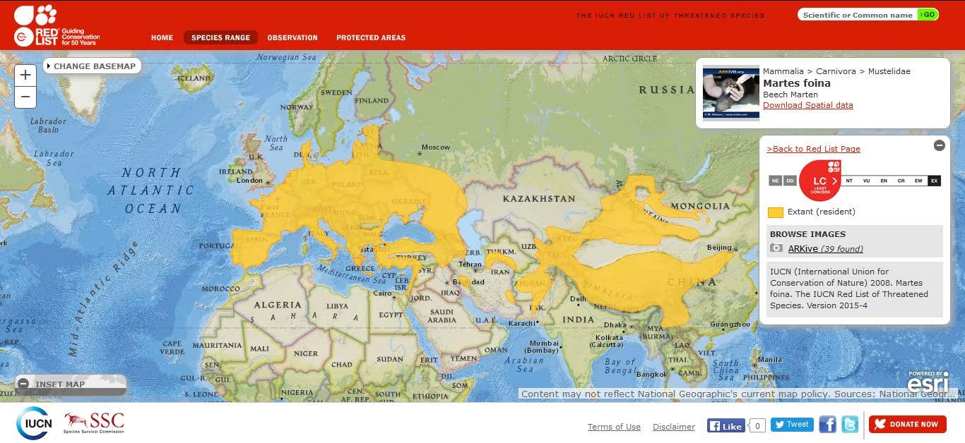 Şekil 4. Ülkemizde de yayılış gösteren kaya sansarının (Martes foina) dünyadaki yayılışı