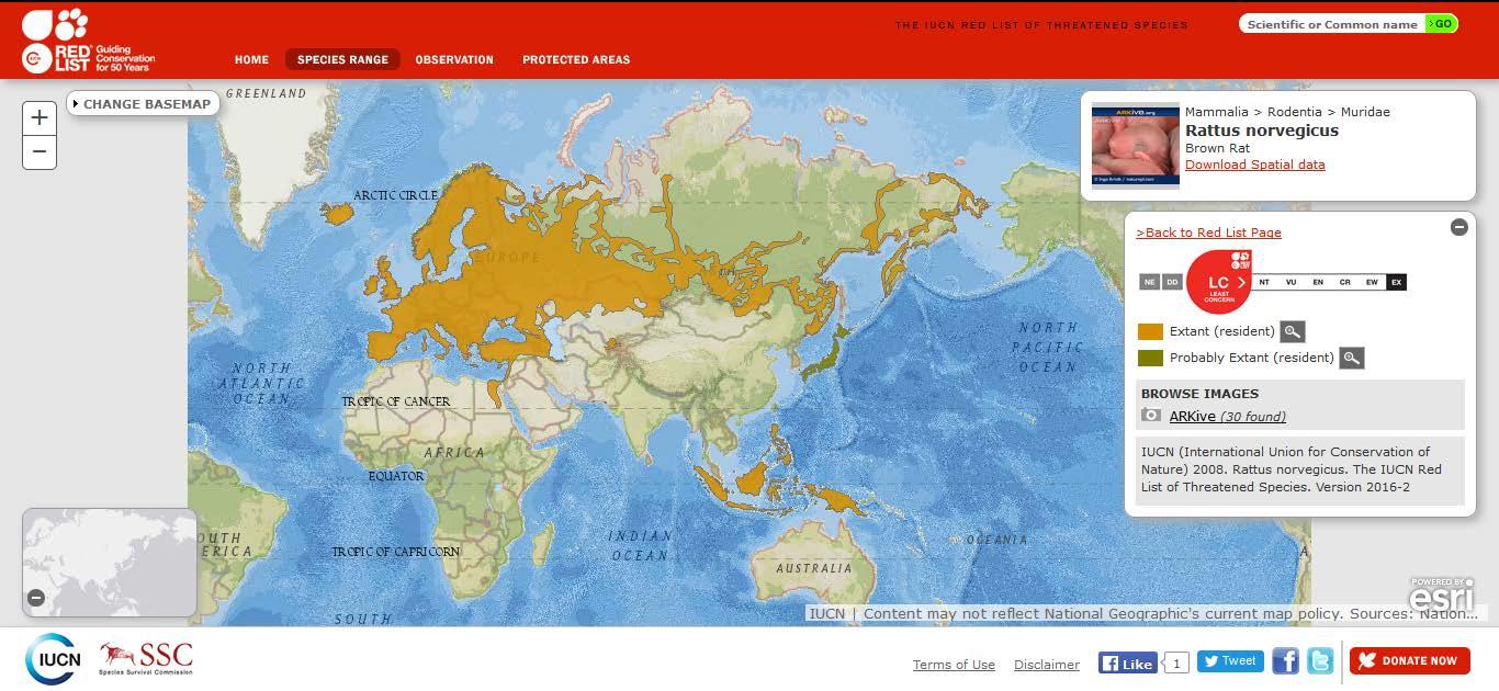 Şekil 7. Ülkemizde de yayılış gösteren göçmen sıçanın (Rattus norvegicus) dünyadaki yayılışı