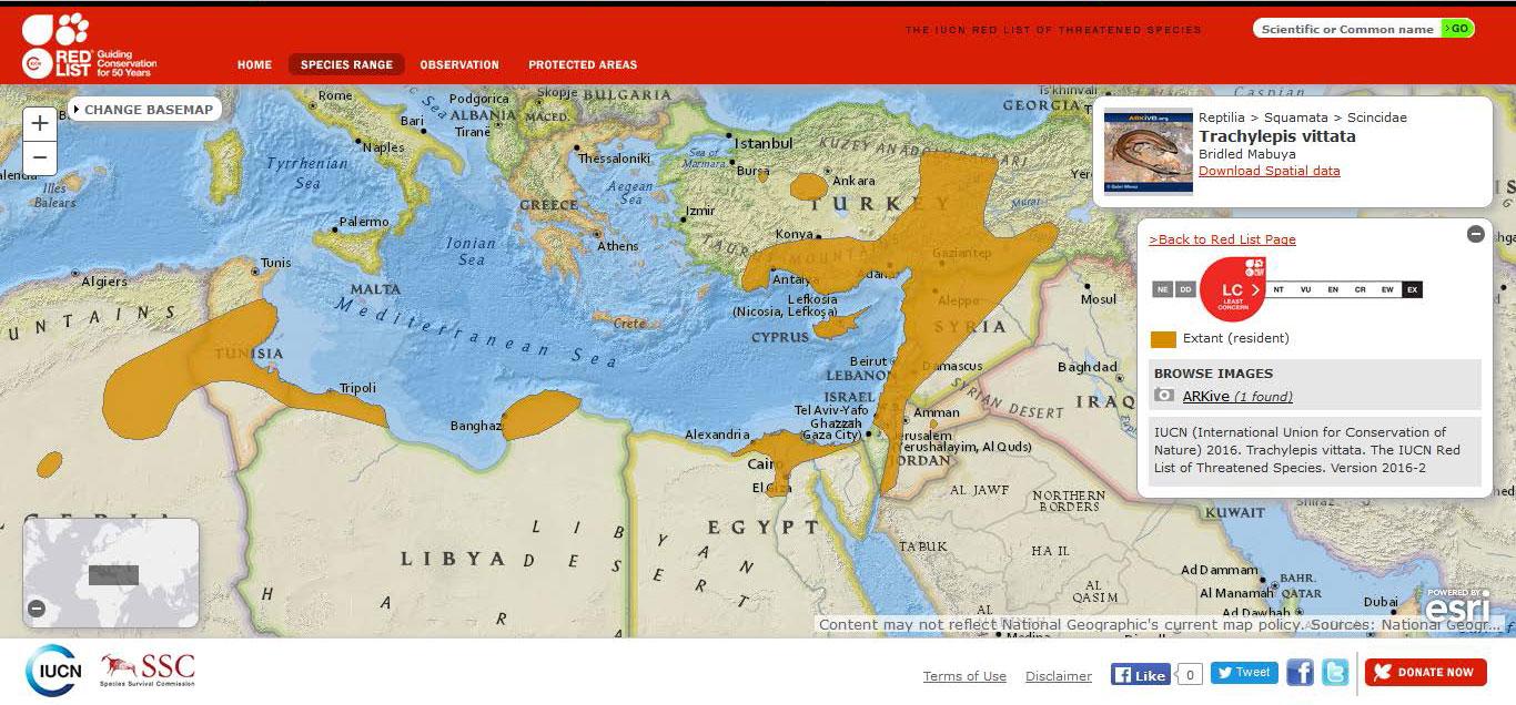Şekil-9.-Ülkemizde-de-yayılış-gösteren-şeritli-kertenkelenin-(Trachylepis-vittata)-dünyadaki-yayılışı