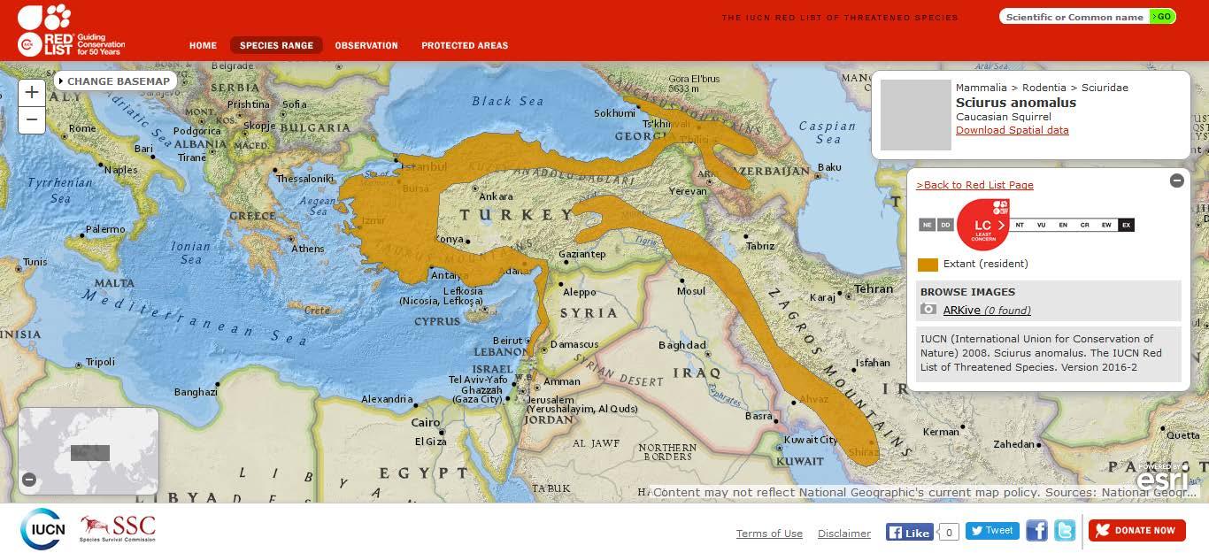 Şekil 9. Ülkemizde de yayılış gösteren Anadolu sincabının (Sciurus anomalus) dünyadaki yayılışı